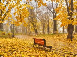 A bench in Autumn season with colorful foliage and trees